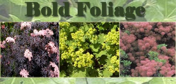 Bold Foliage