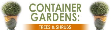 Container Gardens: Trees and Shrubs
