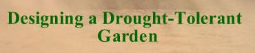 Designing a Drought Garden