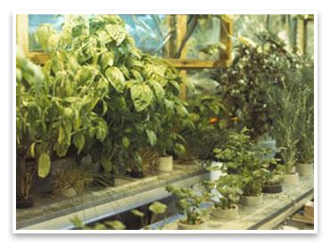 Bring Herbs Indoors