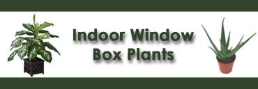 Indoor Window Box Plants