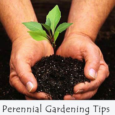 http://www.gardenpartners.com/library/images/perennial_tips2007.jpg