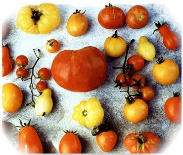 Tomato Types