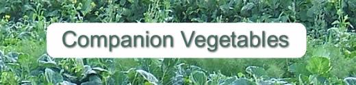 Companion veggies