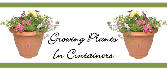 Growing Plants in Containers