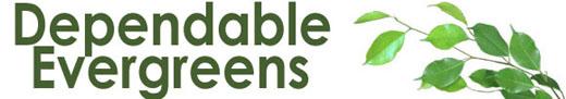 Dependable Evergreens