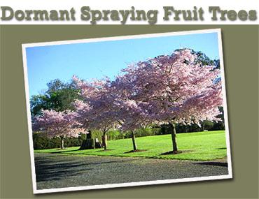 Dormant Spray