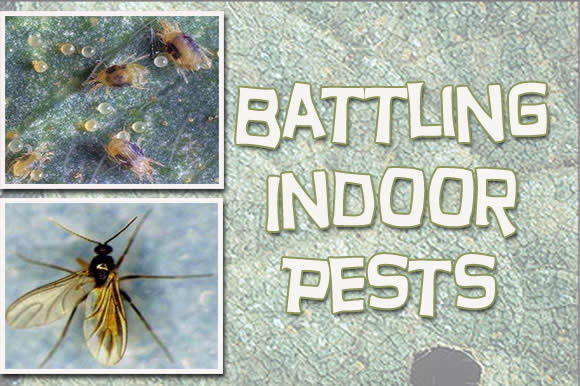 Battling Indoor Pests