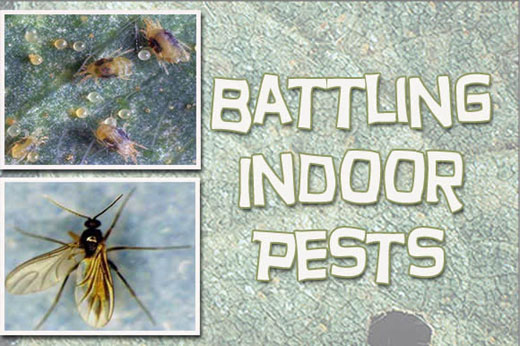 Battling Indoor Pests