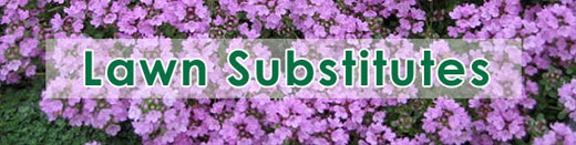 Lawn Substitutes
