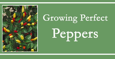 Growing Perfect Peppers