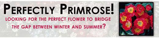 Perfectly Primrose!
