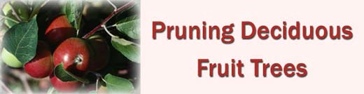 Pruning Deciduous Fruit Trees