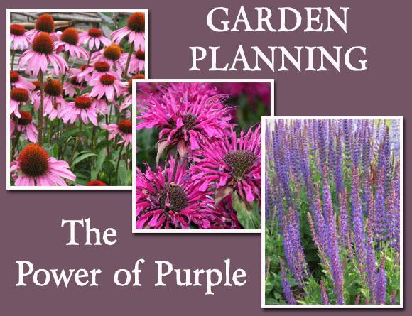 Garden Planning: The Power of Purple