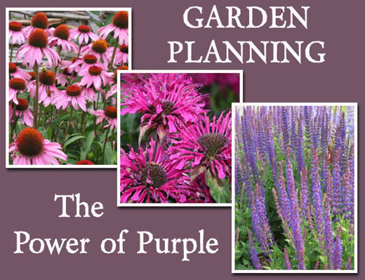 Garden Planning: The Power of Purple
