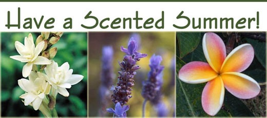 Have a Scented Summer!