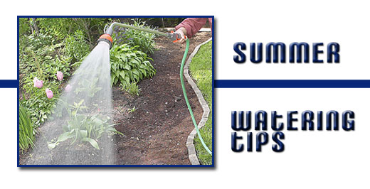 Summer Watering Tips