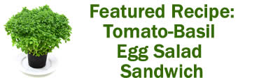 Featured Recipe: Tomato Basil Egg Salad Sandwich