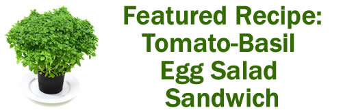 Featured Recipe: Tomato Basil Egg Salad Sandwich