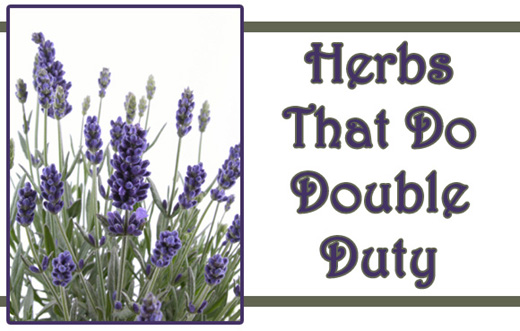 Double-Duty Herbs