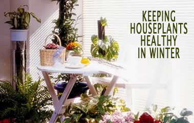 Keeping Houseplants Healthy in Winter