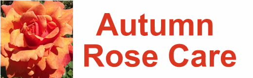 Autumn Rose Care