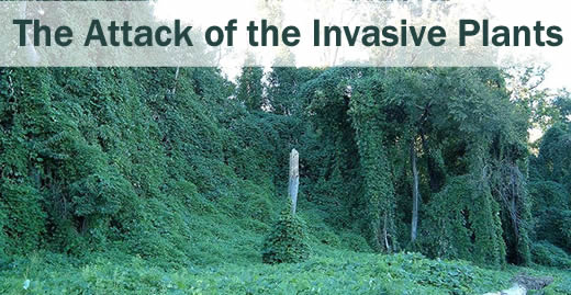 The Attack of the Invasive Plants