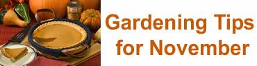 Gardening Tips for November