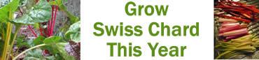 Grow Swiss Chard this Fall