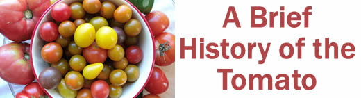 A Brief History of the Tomato