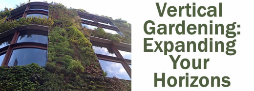 Vertical Gardening - Expanding Your Horizons