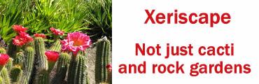 Planning a Xeriscape Garden