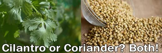 Cilantro or Coriander? Both!